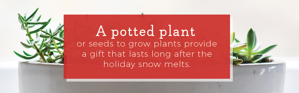 potted-plant-gift