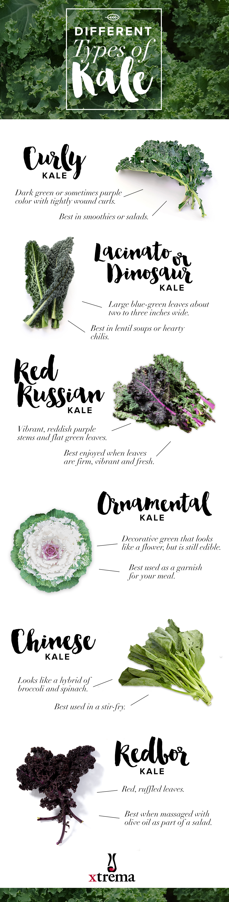The Different Types of Kale